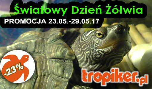 1  światowy dzień żółwia promocja