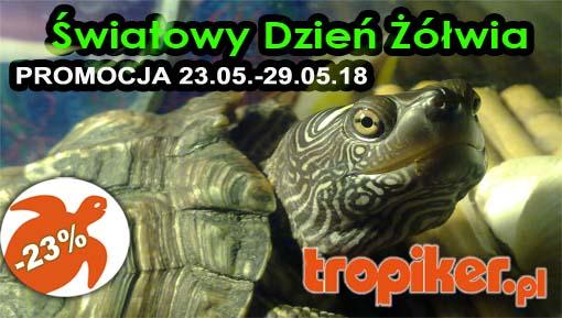 1 swiatowy dzien żółwia