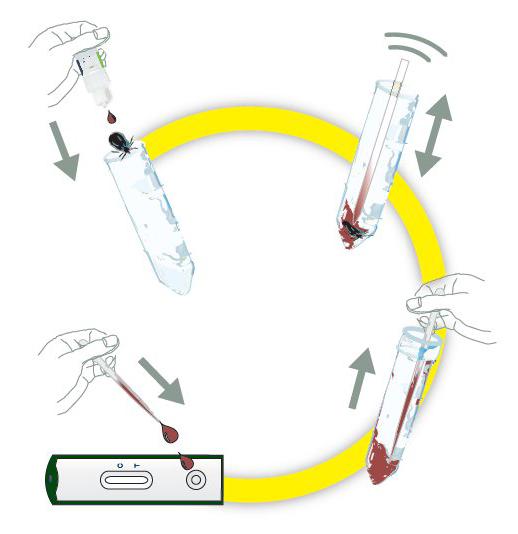 Test na boreliozę Care Plus Tick-Test